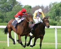 Les centres d'entrainement pour les chevaux de course en France