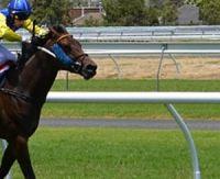 Futurs chevaux de course : les ventes en hausse