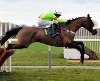 Les différents types de chevaux de course