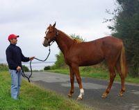 L'élevage des chevaux de course