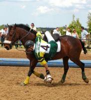 Saut d'obstacles et Horse-Ball, les paris hippiques de 2011 !