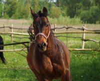 Les maladies que peuvent avoir les chevaux de course
