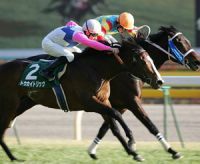 Les métiers qui tournent autour des chevaux de course