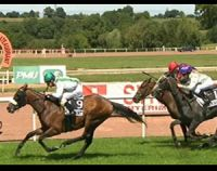 Prix Jean Bart 2011 : Royal Ultimatenia favori pour LeTurf.fr ?