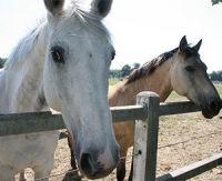 Les différents types d'élevage de chevaux de course