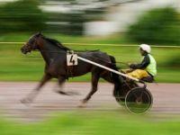 Quand faut-il placer son pari en ligne sur un cheval ?